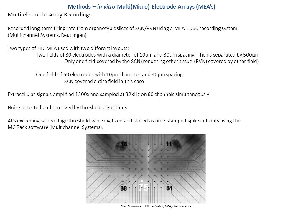 Multi-electrode Array Recordings Methods – in vitro Multi(Micro) Electrode Arrays (MEA's) Recorded long-term firing rate from organotypic slices of SCN/PVN using a MEA-1060 recording system (Multichannel Systems, Reutlingen) Two types of HD-MEA used with two different layouts: Two fields of 30 electrodes with a diameter of 10µm and 30µm spacing – fields separated by 500µm Only one field covered by the SCN (rendering other tissue (PVN) covered by other field) One field of 60 electrodes with 10µm diameter and 40µm spacing SCN covered entire field in this case Extracellular signals amplified 1200x and sampled at 32kHz on 60 channels simultaneously Noise detected and removed by threshold algorithms APs exceeding said voltage threshold were digitized and stored as time-stamped spike cut-outs using the MC Rack software (Multichannel Systems).