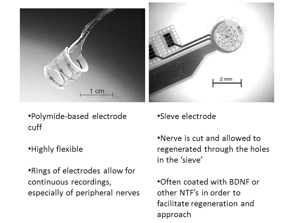 Polymide-based electrode cuff Highly flexible Rings of electrodes allow for continuous recordings, especially of peripheral nerves Sieve electrode Nerve is cut and allowed to regenerated through the holes in the 'sieve' Often coated with BDNF or other NTF's in order to facilitate regeneration and approach