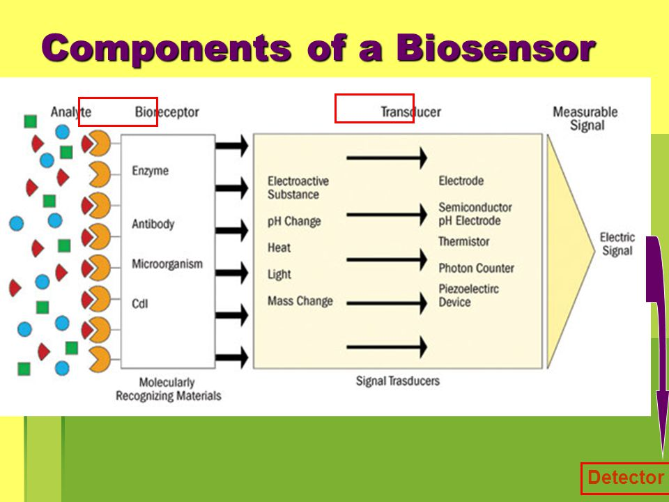 Components of a Biosensor Detector