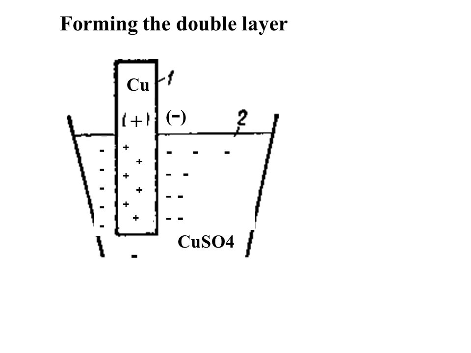 Cu CuSO4 (-)(-) + + - - - - - ---------- Forming the double layer