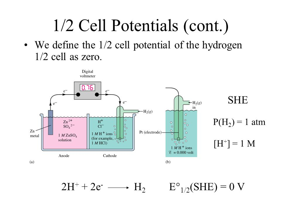 1/2 Cell Potentials (cont.) We define the 1/2 cell potential of the hydrogen 1/2 cell as zero.
