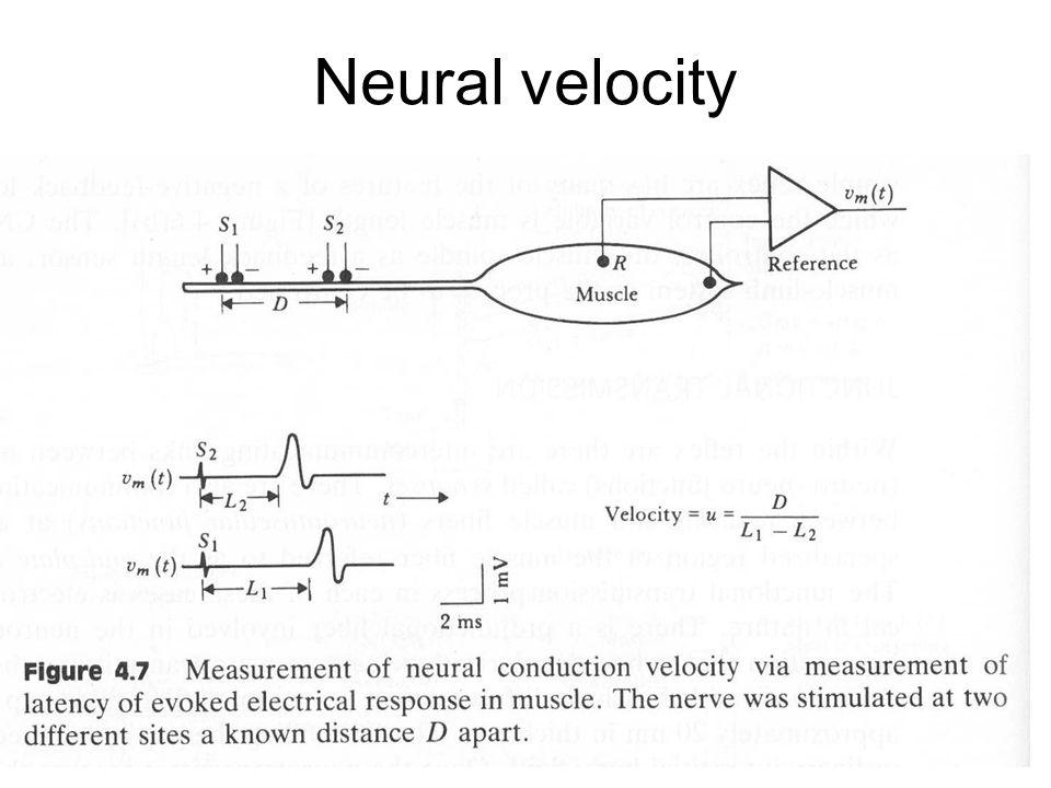 Neural velocity