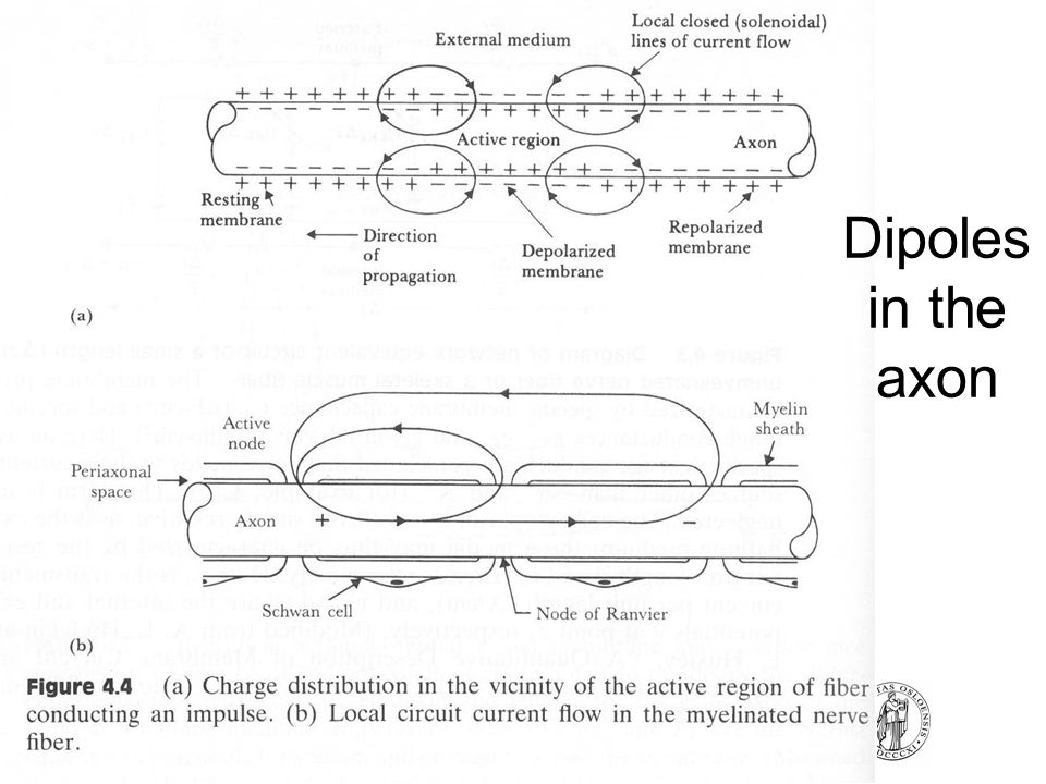 Dipoles in the axon