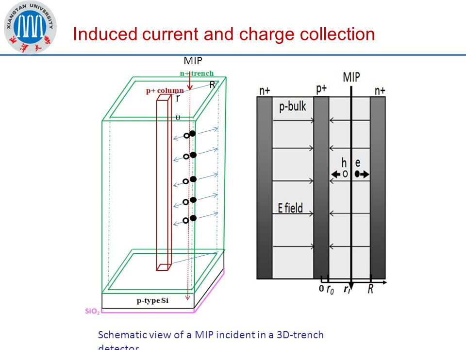 Induced current and charge collection Schematic view of a MIP incident in a 3D-trench detector.