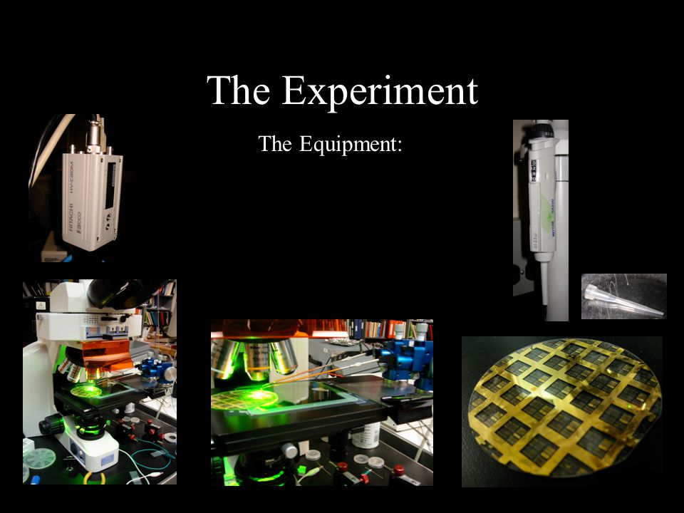 The Experiment The Equipment: