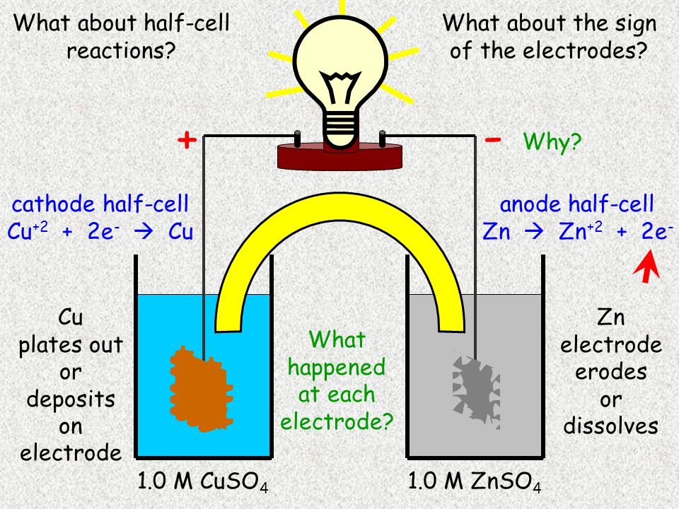Cu 1.0 M CuSO 4 Zn 1.0 M ZnSO 4 Cu plates out or deposits on electrode Zn electrode erodes or dissolves cathode half-cell Cu +2 + 2e -  Cu anode half-cell Zn  Zn +2 + 2e - - + What about half-cell reactions.