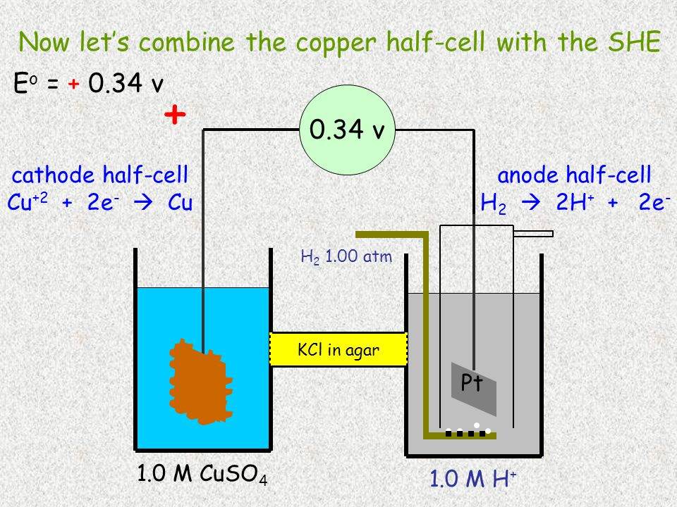 H 2 1.00 atm Pt 1.0 M H + Cu 1.0 M CuSO 4 0.34 v cathode half-cell Cu +2 + 2e -  Cu anode half-cell H 2  2H + + 2e - KCl in agar + Now let's combine the copper half-cell with the SHE E o = + 0.34 v
