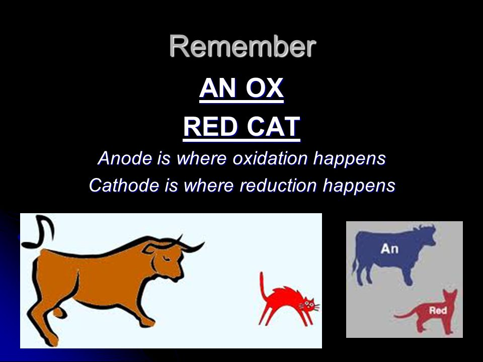 Remember AN OX RED CAT Anode is where oxidation happens Cathode is where reduction happens