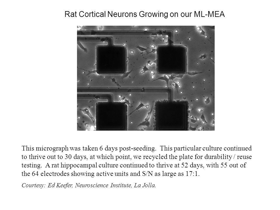 Action Potentials Recorded with an ML - MEA Twenty five superimposed AP's from the rat cortical neuron culture show excellent reproducibility in amplitude, timing and shape.