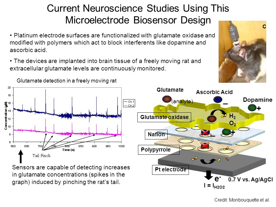 Current Neuroscience Studies Using This Microelectrode Biosensor Design Glutamate detection in a freely moving rat Platinum electrode surfaces are functionalized with glutamate oxidase and modified with polymers which act to block interferents like dopamine and ascorbic acid.