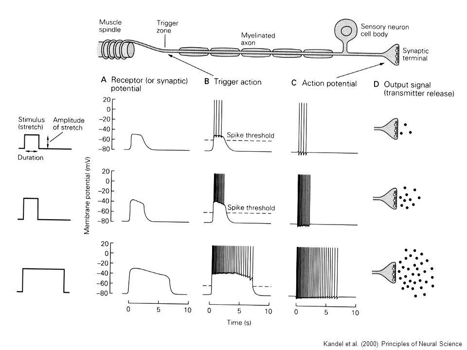 Kandel et al. (2000) Principles of Neural Science