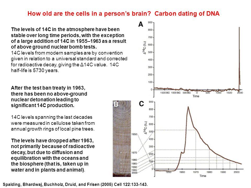 Spalding, Bhardwaj, Buchholz, Druid, and Frisen (2005) Cell 122:133-143.