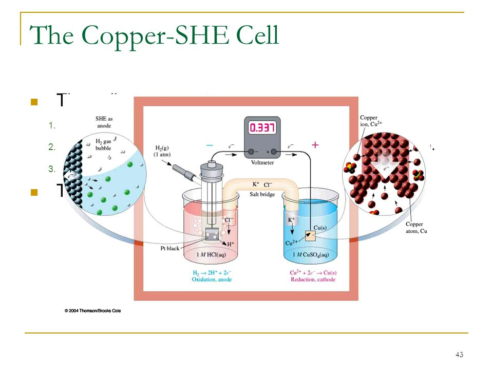 43 The Copper-SHE Cell The cell components are: 1. A Cu strip immersed in 1.0 M copper (II) sulfate. 2. The other electrode is a Standard Hydrogen Ele