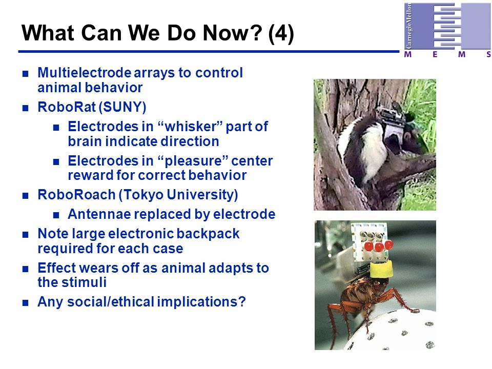 "What Can We Do Now? (4) n Multielectrode arrays to control animal behavior n RoboRat (SUNY) n Electrodes in ""whisker"" part of brain indicate direction"