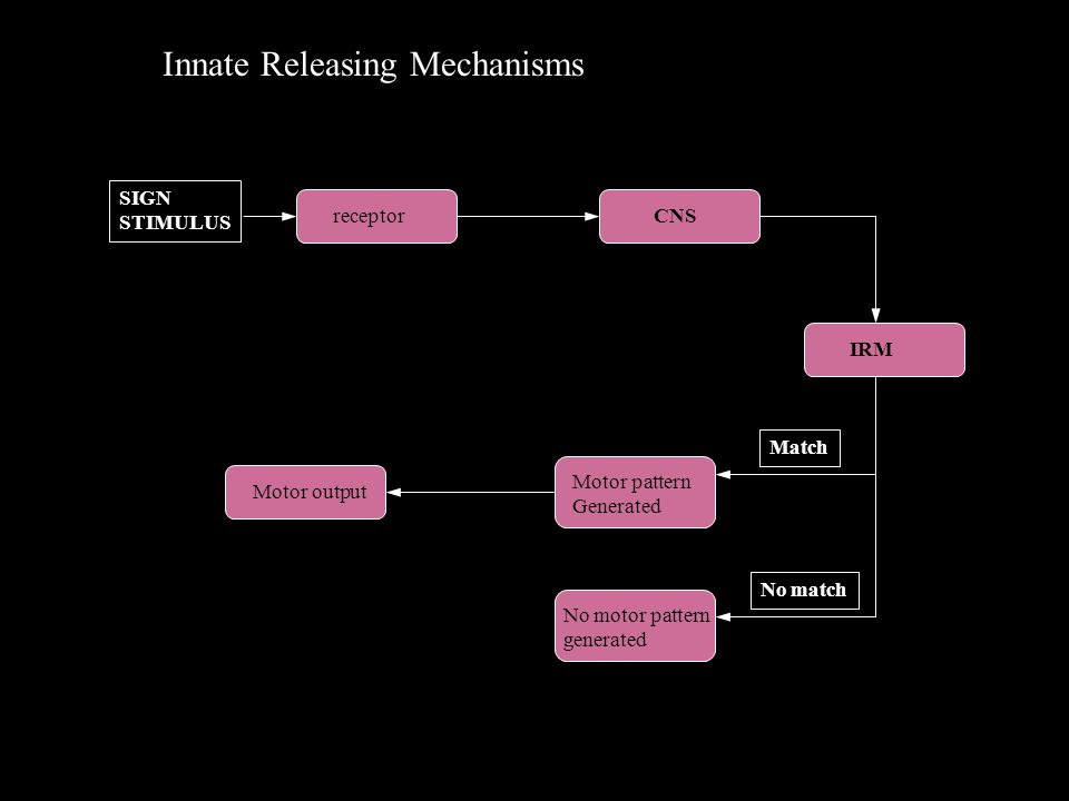 Innate Releasing Mechanisms SIGN STIMULUS receptorCNS IRM Motor pattern Generated No motor pattern generated Match No match Motor output