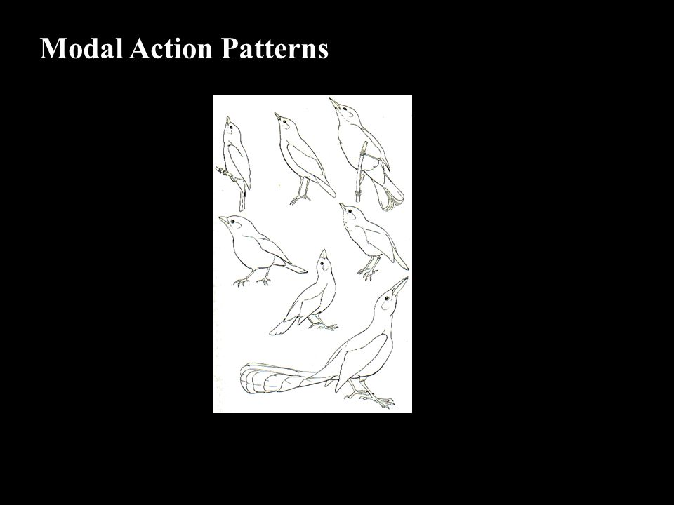 Modal Action Patterns