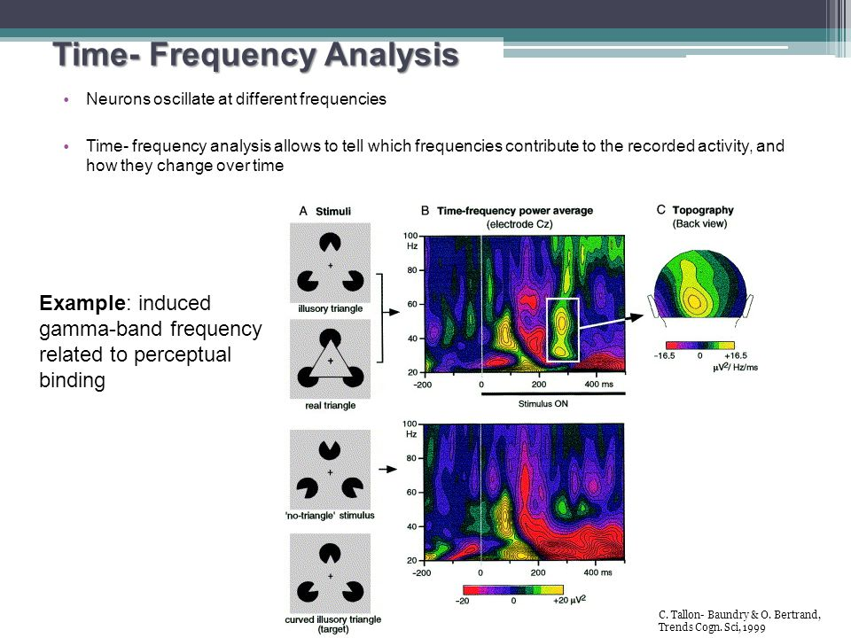 Time- Frequency Analysis Neurons oscillate at different frequencies Time- frequency analysis allows to tell which frequencies contribute to the record