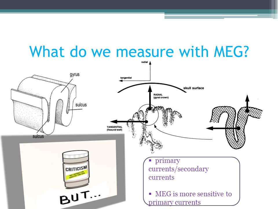 What do we measure with MEG?  primary currents/secondary currents  MEG is more sensitive to primary currents