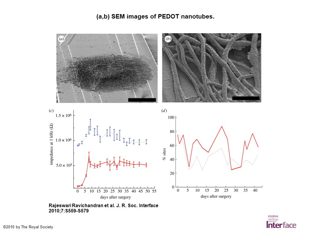 (a,b) SEM images of PEDOT nanotubes. Rajeswari Ravichandran et al.