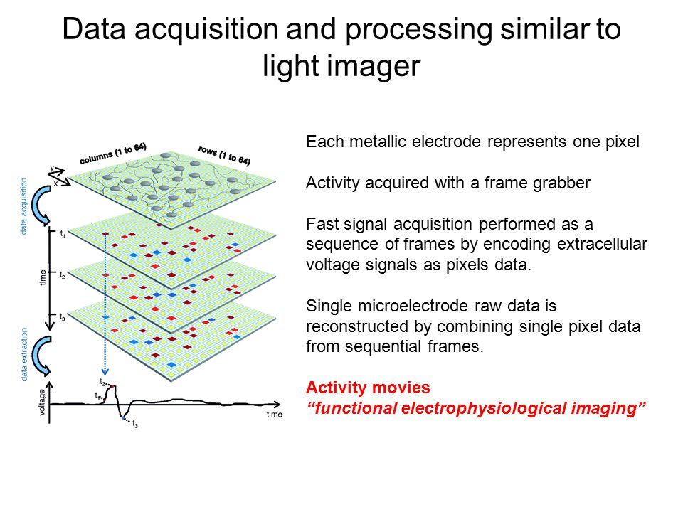 Data acquisition and processing similar to light imager Each metallic electrode represents one pixel Activity acquired with a frame grabber Fast signa