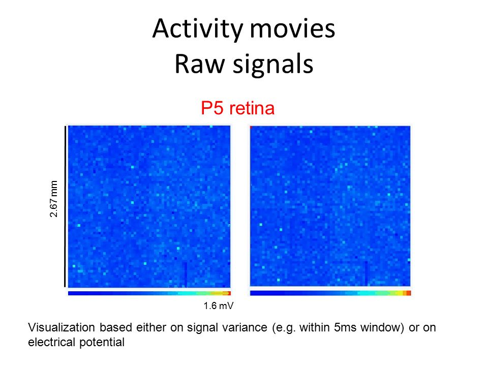 Activity movies Raw signals 2.67 mm 1.6 mV P5 retina Visualization based either on signal variance (e.g. within 5ms window) or on electrical potential