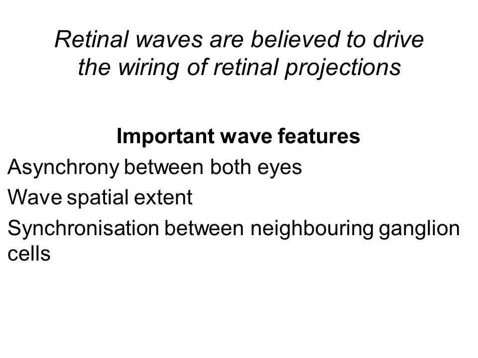 Retinal waves are believed to drive the wiring of retinal projections Important wave features Asynchrony between both eyes Wave spatial extent Synchro