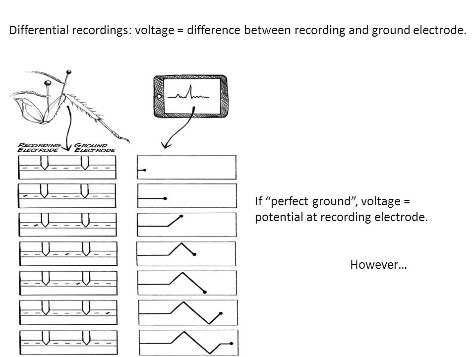 """Differential recordings: voltage = difference between recording and ground electrode. If """"perfect ground"""", voltage = potential at recording electrode."""