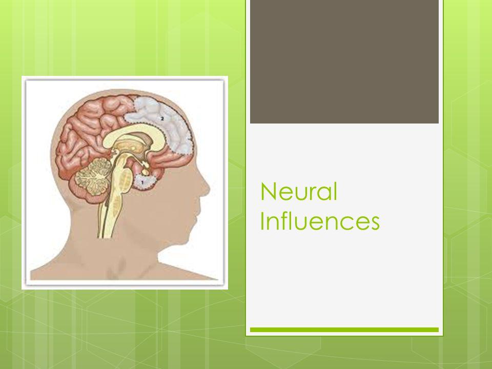 Neural Influences