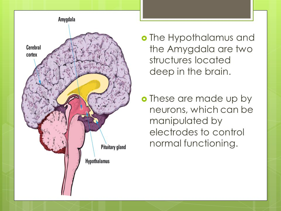  Animals such as dogs and cats have been observed to be particularly aggressive towards animals that would usually produce a neutral response when the amygdala and the hypothalamus are activated by electrode s