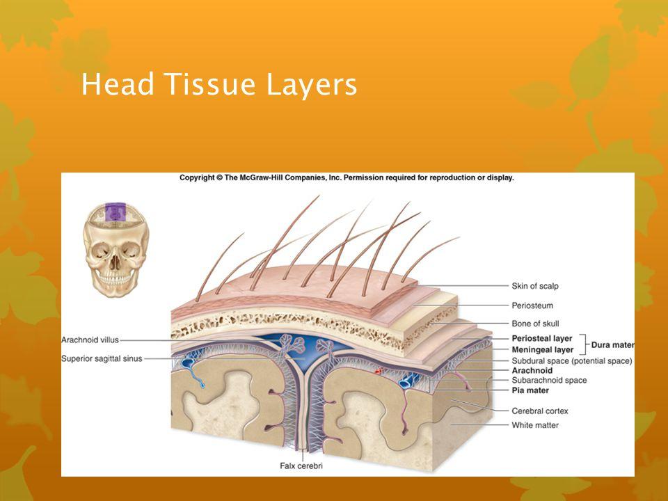 Head Tissue Layers
