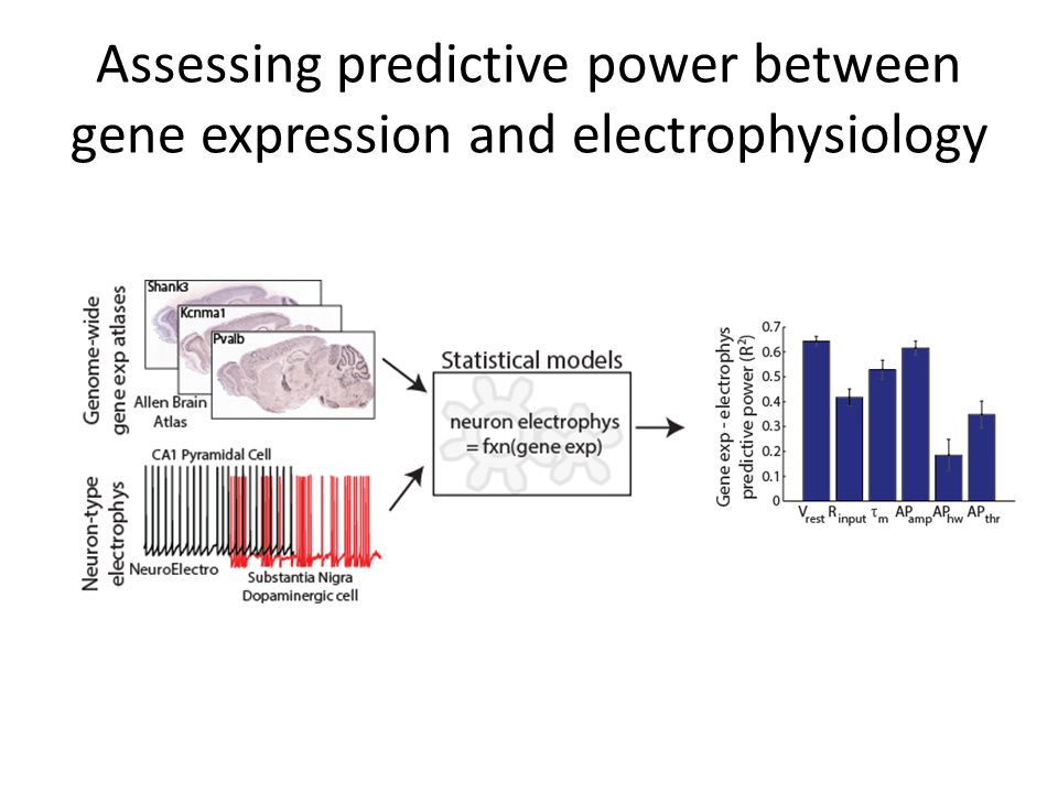 Assessing predictive power between gene expression and electrophysiology