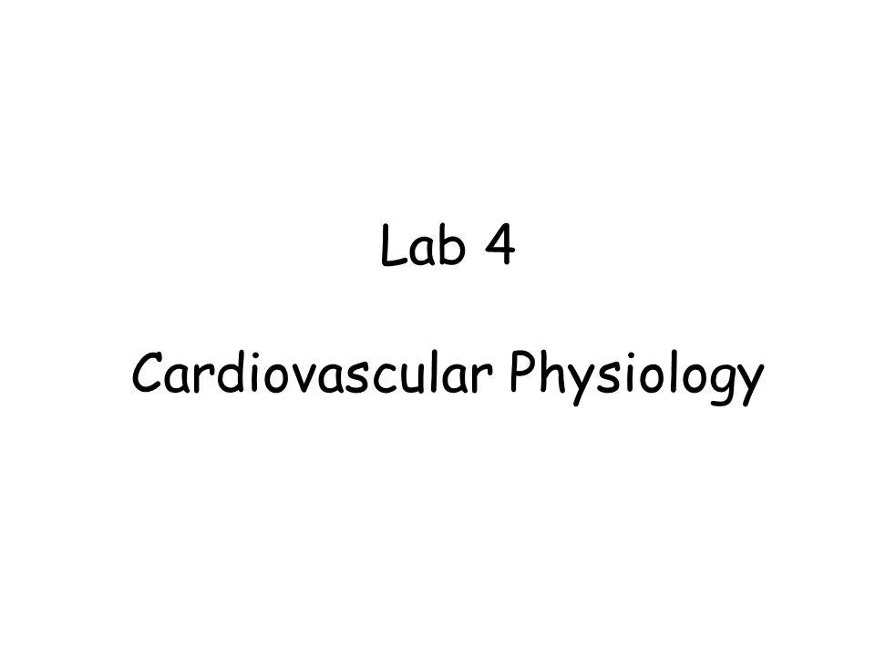 Lab 4 Cardiovascular Physiology