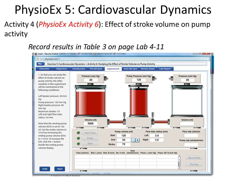 Activity 4 (PhysioEx Activity 6): Effect of stroke volume on pump activity Record results in Table 3 on page Lab 4-11 PhysioEx 5: Cardiovascular Dynamics