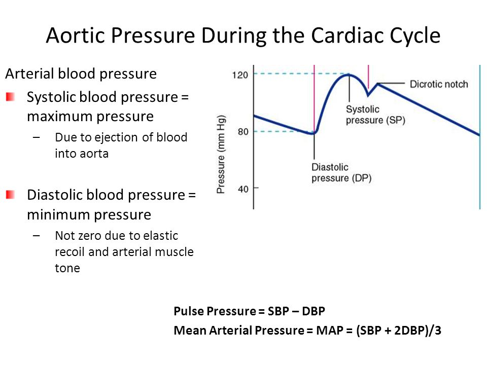 Aortic Pressure During the Cardiac Cycle Pulse Pressure = SBP – DBP Mean Arterial Pressure = MAP = (SBP + 2DBP)/3 Arterial blood pressure Systolic blood pressure = maximum pressure –Due to ejection of blood into aorta Diastolic blood pressure = minimum pressure –Not zero due to elastic recoil and arterial muscle tone