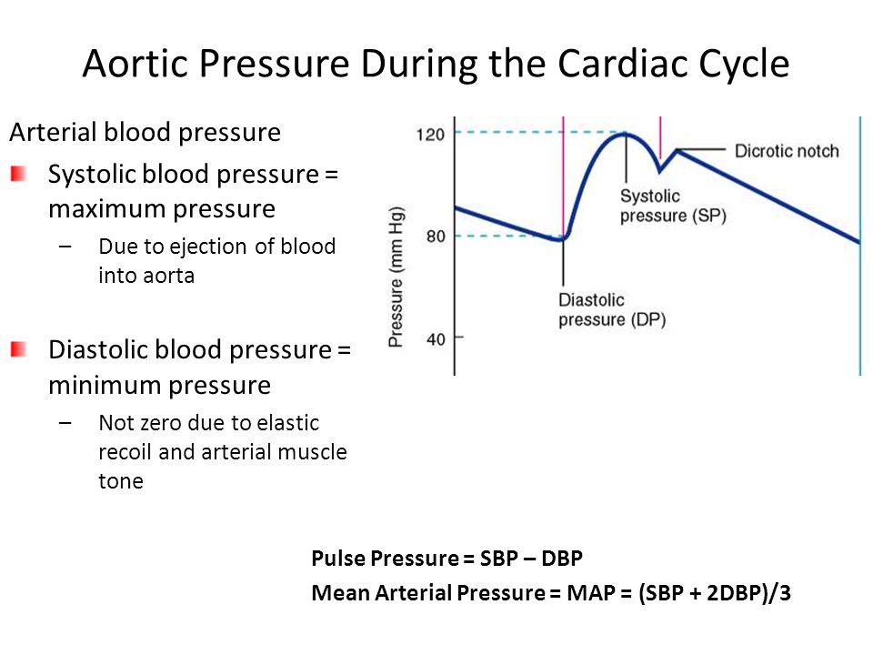 Aortic Pressure During the Cardiac Cycle Pulse Pressure = SBP – DBP Mean Arterial Pressure = MAP = (SBP + 2DBP)/3 Arterial blood pressure Systolic blo