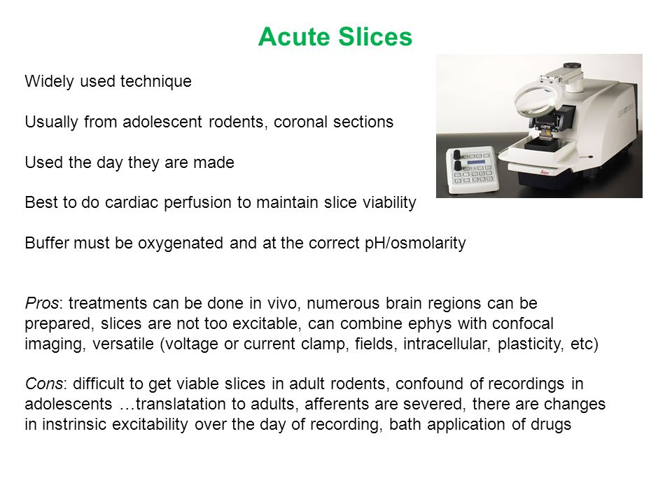 Acute Slices Widely used technique Usually from adolescent rodents, coronal sections Used the day they are made Best to do cardiac perfusion to mainta