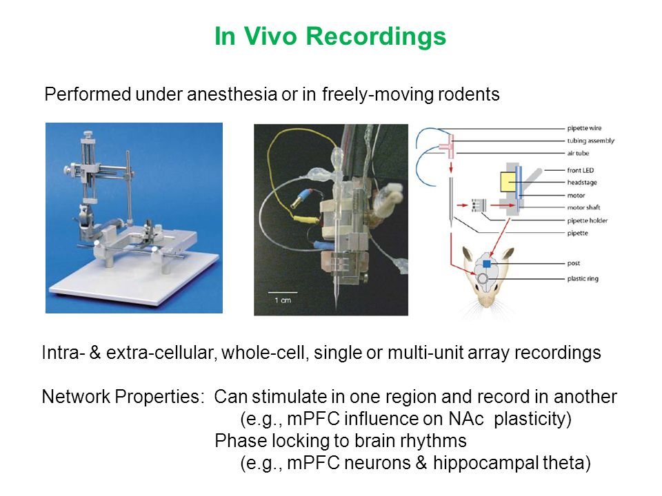 Performed under anesthesia or in freely-moving rodents In Vivo Recordings Intra- & extra-cellular, whole-cell, single or multi-unit array recordings N