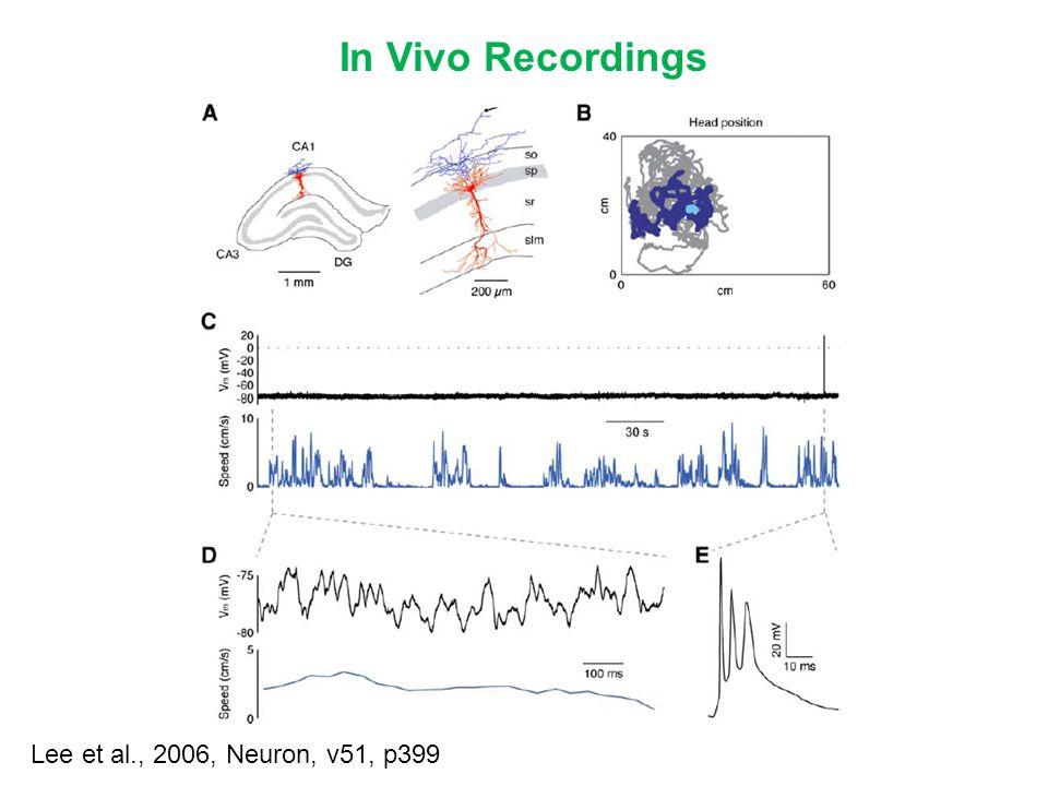 In Vivo Recordings Lee et al., 2006, Neuron, v51, p399