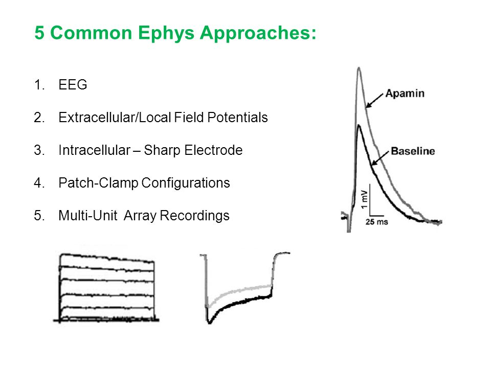 5 Common Ephys Approaches: 1.EEG 2.Extracellular/Local Field Potentials 3.Intracellular – Sharp Electrode 4.Patch-Clamp Configurations 5.Multi-Unit Ar
