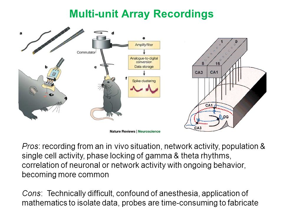 Multi-unit Array Recordings Pros: recording from an in vivo situation, network activity, population & single cell activity, phase locking of gamma & t