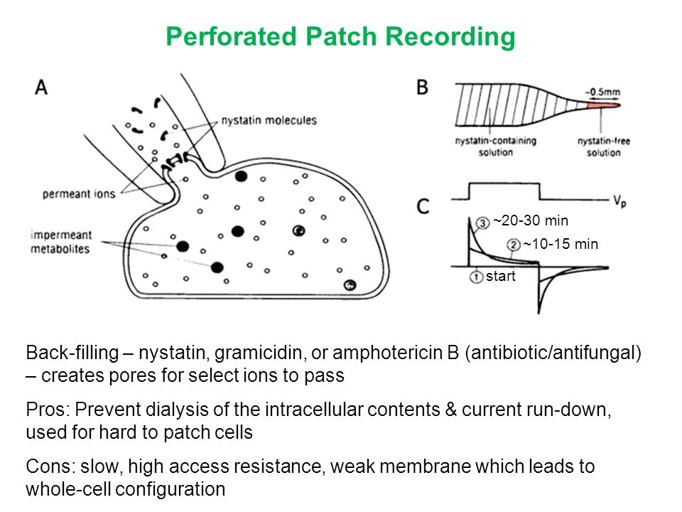 Perforated Patch Recording Back-filling – nystatin, gramicidin, or amphotericin B (antibiotic/antifungal) – creates pores for select ions to pass Pros