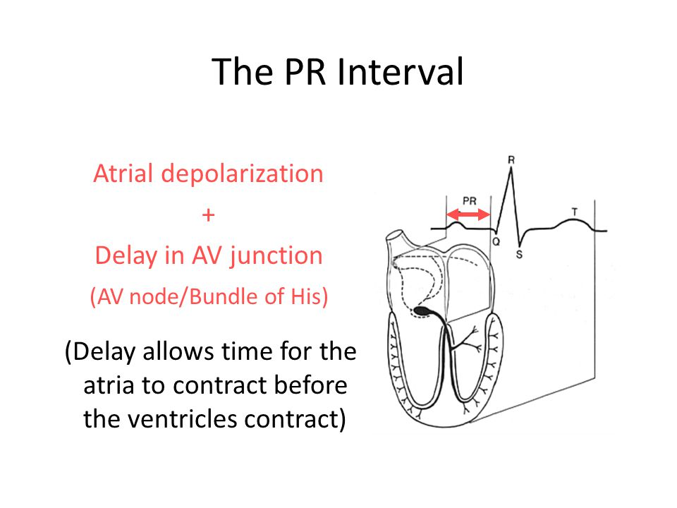 The PR Interval Atrial depolarization + Delay in AV junction (AV node/Bundle of His) (Delay allows time for the atria to contract before the ventricle
