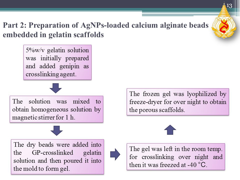 Part 2: Preparation of AgNPs-loaded calcium alginate beads embedded in gelatin scaffolds 5%w/v gelatin solution was initially prepared and added genipin as crosslinking agent.