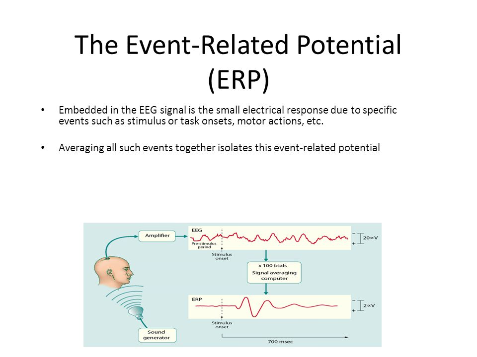 The Event-Related Potential (ERP) Embedded in the EEG signal is the small electrical response due to specific events such as stimulus or task onsets, motor actions, etc.