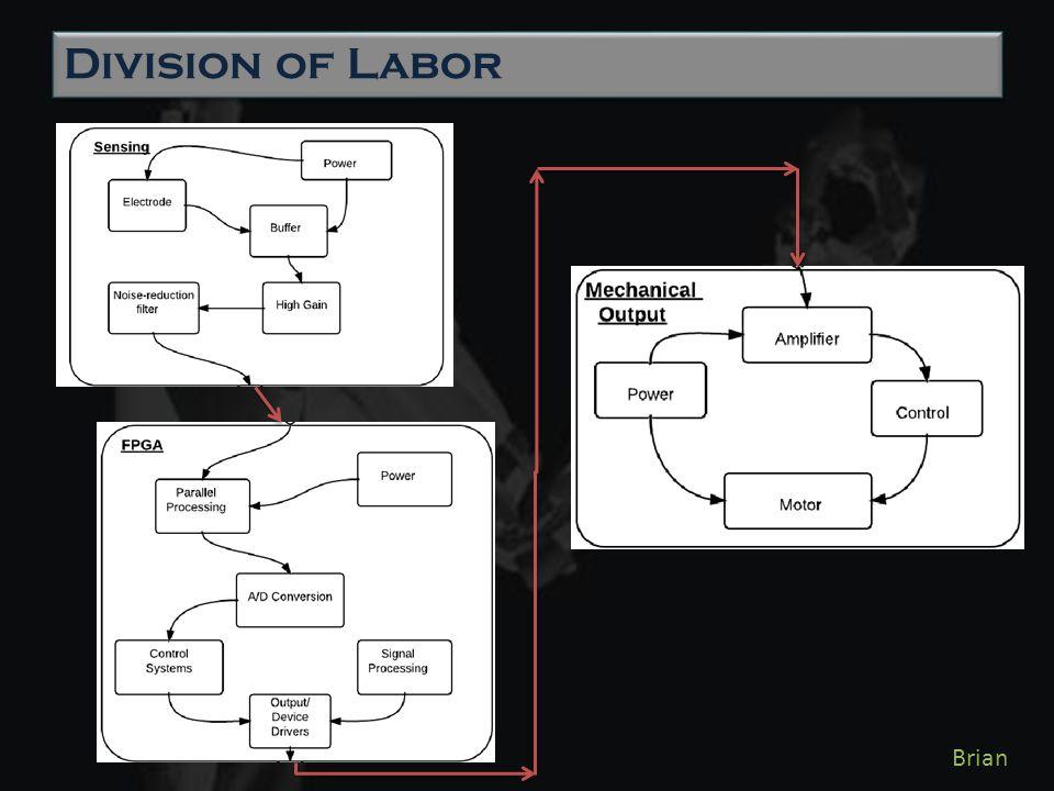 Division of Labor Brian