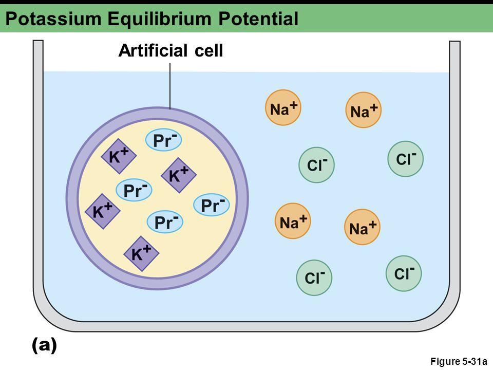 Figure 5-31a Potassium Equilibrium Potential Artificial cell (a)