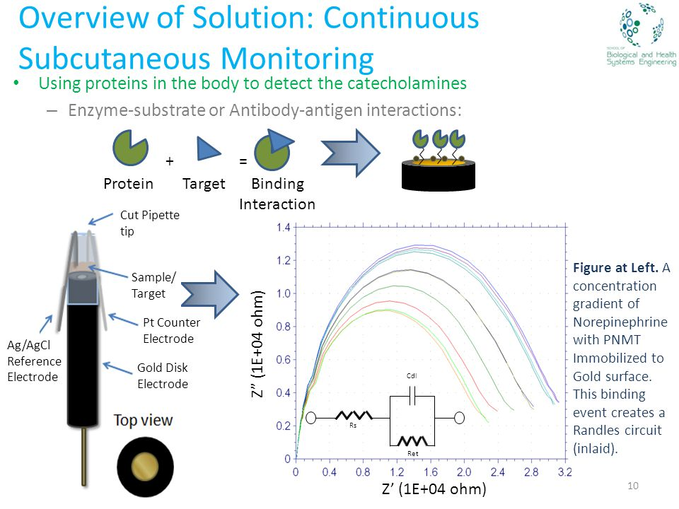 Overview of Solution: Continuous Subcutaneous Monitoring Using proteins in the body to detect the catecholamines – Enzyme-substrate or Antibody-antigen interactions: ProteinTarget += Binding Interaction Ag/AgCl Reference Electrode Cut Pipette tip Sample/ Target Gold Disk Electrode Pt Counter Electrode Z (1E+04 ohm) Figure at Left.
