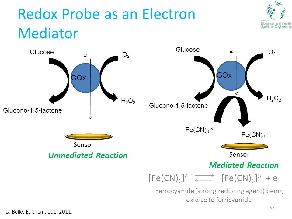 Redox Probe as an Electron Mediator 23 e-e- GOx Glucose Glucono-1,5-lactone O2O2 H2O2H2O2 Unmediated Reaction e-e- GOx Glucose Glucono-1,5-lactone Fe(CN) 6 -3 Fe(CN) 6 -4 O2O2 H2O2H2O2 Mediated Reaction Sensor La Belle, E.