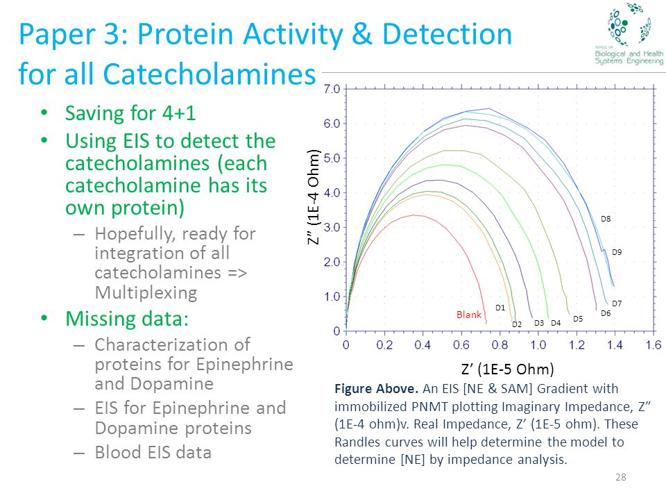 Paper 3: Protein Activity & Detection for all Catecholamines Saving for 4+1 Using EIS to detect the catecholamines (each catecholamine has its own protein) – Hopefully, ready for integration of all catecholamines => Multiplexing Missing data: – Characterization of proteins for Epinephrine and Dopamine – EIS for Epinephrine and Dopamine proteins – Blood EIS data 28 Z (1E-4 Ohm) Z' (1E-5 Ohm) Blank D1 D2 D3D4 D5 D6 D7 D8 D9 Figure Above.