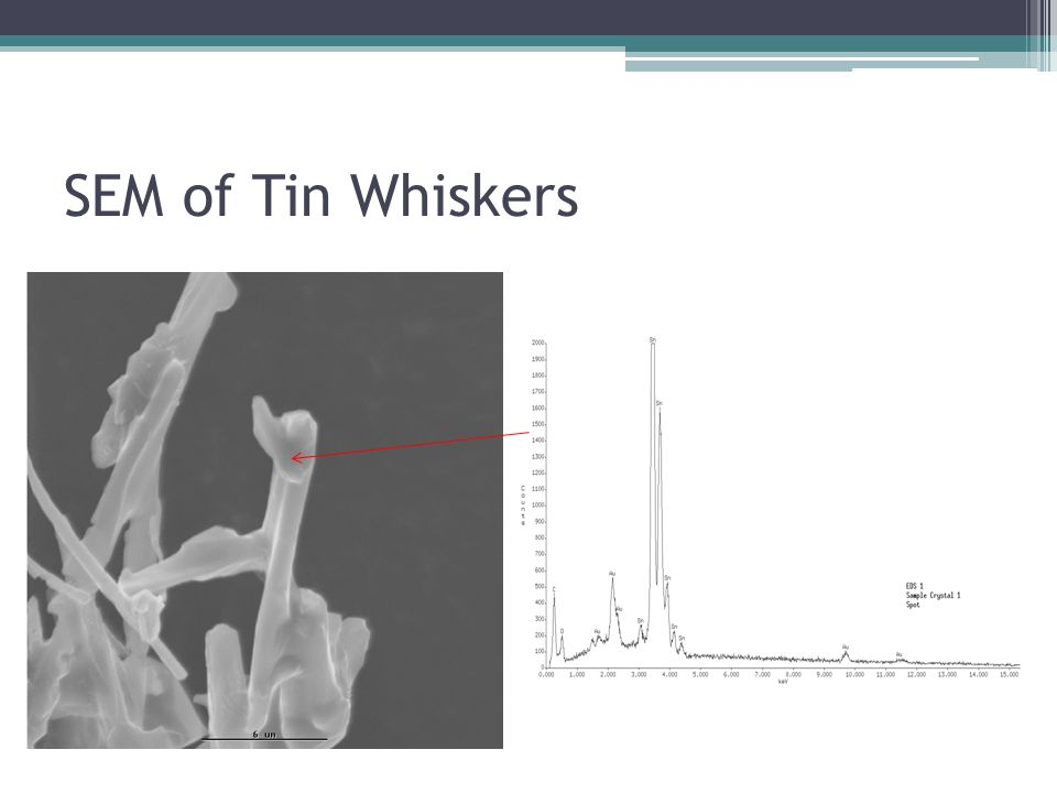 SEM of Tin Whiskers